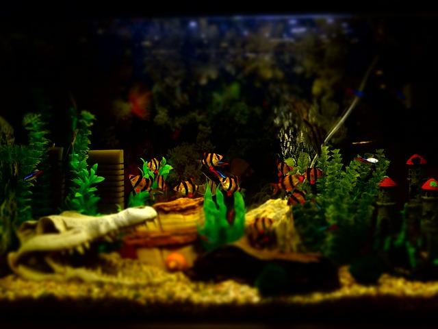 akvárium a rybičky