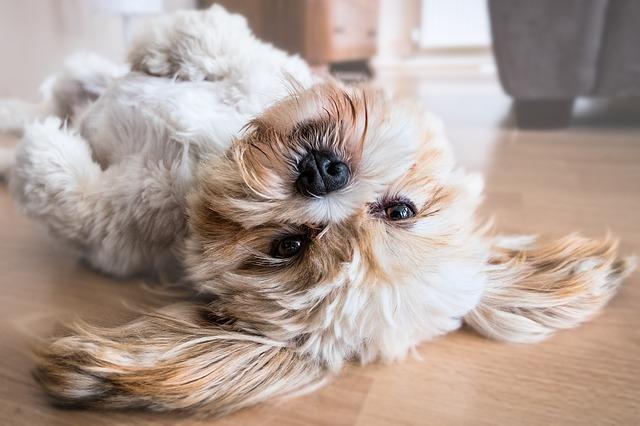 pes leží na zemi